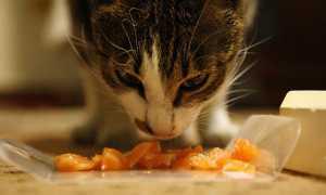 Как сделать сухой корм для животных