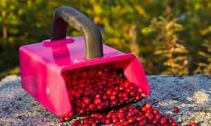 Делаем комбайн для сбора ягод своими руками