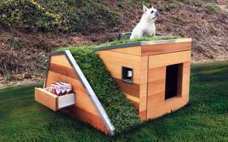 Будка для собаки с дозорной площадкой своими руками