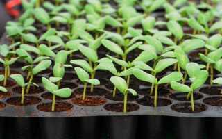 Сад и огород своими руками. Ошибки при посадке семян и рассады (видео)