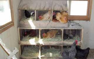 Классная кормушка и гнездо с яйцеприемником для кур (видео)