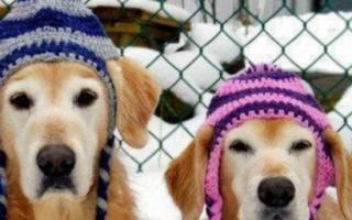 Отличная будка для собаки своими руками