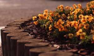 Красивый бордюр – элемент ландшафтного дизайна в саду