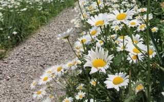 Красивая садовая дорожка своими руками (фото, пошагово)