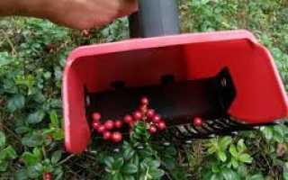 Устройство для сортировки ягод (чертежи и схемы)