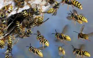 Как избавиться от пчел и ос