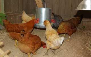 Самодельная переносная кормушка для кур
