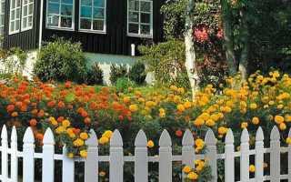 Плиточные узоры в саду. Ландшафтные хитрости (видео)
