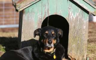 Классическая будка для собаки своими руками