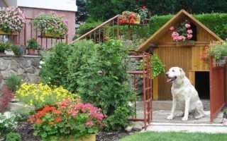 Красивая будка-домик для собаки своими руками (фото, пошагово)
