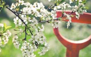 Как эффективно размножать деревья и кустарники